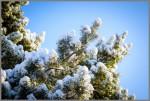 Winterbild in Großziethen